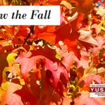 Fall 2019 YUSAPUY Newsletter Now Online